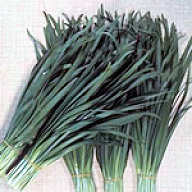 Chinese Chives New Belt