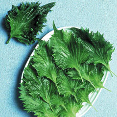 Perilla Shiso Green 200 seeds