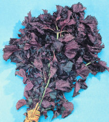 Perilla Shiso Red 400 seeds