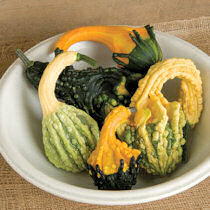 Gourds. Autumn Wings Mixture 10 seeds