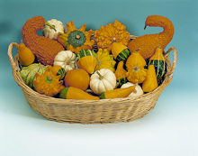 Gourds. Small Fruited Gourd Ornamental Mixed 20 seeds