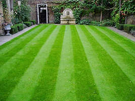 Formal Lawn and Greens grass seed 10kg