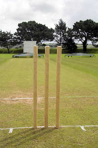 Cricket Wicket Grass Seed