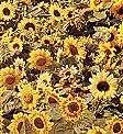Helianthus. Sunflower Music Box Mixed 30 seeds