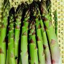 Asparagus Connovers Colossal 70 seeds
