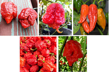 A pkt BTR Scorpion VEG276  Carolina Reaper VEG581 Bhut Jolokia VEG781 Trinidad Brain Strain VEG040 and Butch T VEG220 10 seeds each