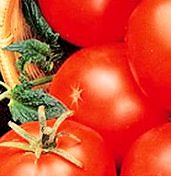 Tomato Seeds Abraham Lincoln Heirloom 15 seeds