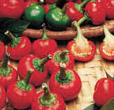 Chilli Seeds Satans Kiss 20 seeds
