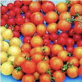 Tomato Heirloom Cherry Mix 20 seeds