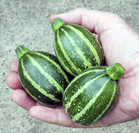 Courgette Piccolo 10 seeds