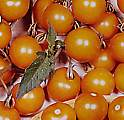 Tomato Seeds Sungold 10 seeds