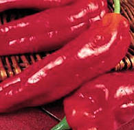 Peppers Sweet Long Red Marconi