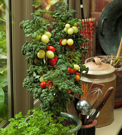 Tomato Patio Plum 10 seeds