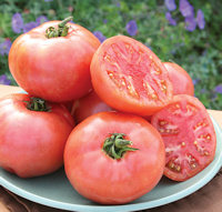 Tomato Seeds Pink Pounder 10 seeds