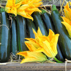 Courgette Darko 10 seeds
