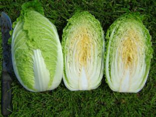 Chinese Cabbage Yuki clubroot resistance 125 seeds
