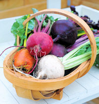 Beetroot Rainbow Beet Mixed 250 seeds
