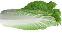 Chinese Cabbage Wa Wa Sai oriental vegetable 100 seeds