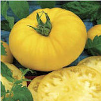 Tomato Seeds Yellow Brandywine 20 seeds