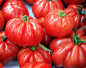 Tomato Seeds Costoluto Genovese 25 seeds