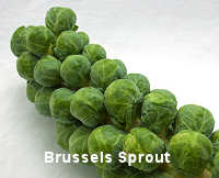 Brussels Sprouts Crispus 30 seeds