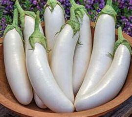 Seeds Aubergine White Knight