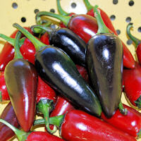 Chilli seeds Black Hungarian 10 seeds