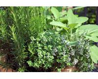 Herb seeds large range from Agrimony to Yarrow